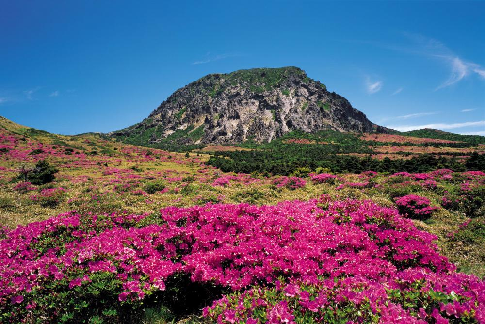 Jeju Island Isn't Just a Social Media Destination — It's a Skincare One, Too