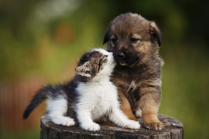 puppy and cat kissing each other